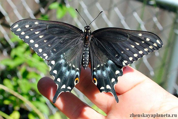 ферма-бабочек-на-острове-Сен-Мартен
