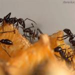 Как навсегда избавиться от муравьёв в доме?