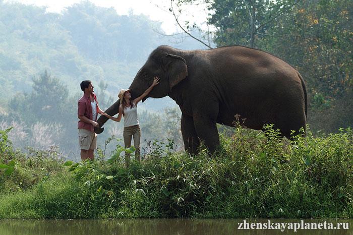незабываемые-впечатления-от-встречи-со-слоном