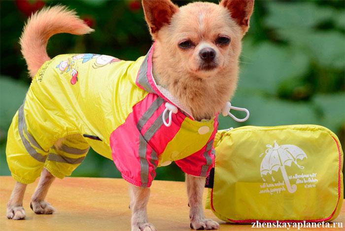 одежда-для-собак