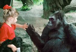 Как развивать познавательную активность ребёнка с помощью образовательных экскурсий?