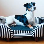 Как выбрать хорошую лежанку для собаки?
