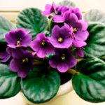5 видов самых полезных комнатных растений