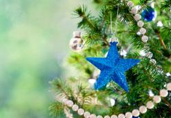 Как продлить жизнь новогодней ёлке?