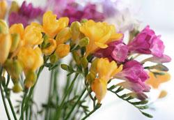 Какие цветы означают доверие?