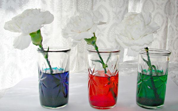 гвоздики в цветной воде